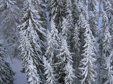 2010 Mullsjö skog.JPG